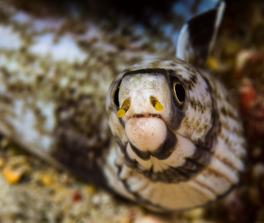 Enigmatic Moray